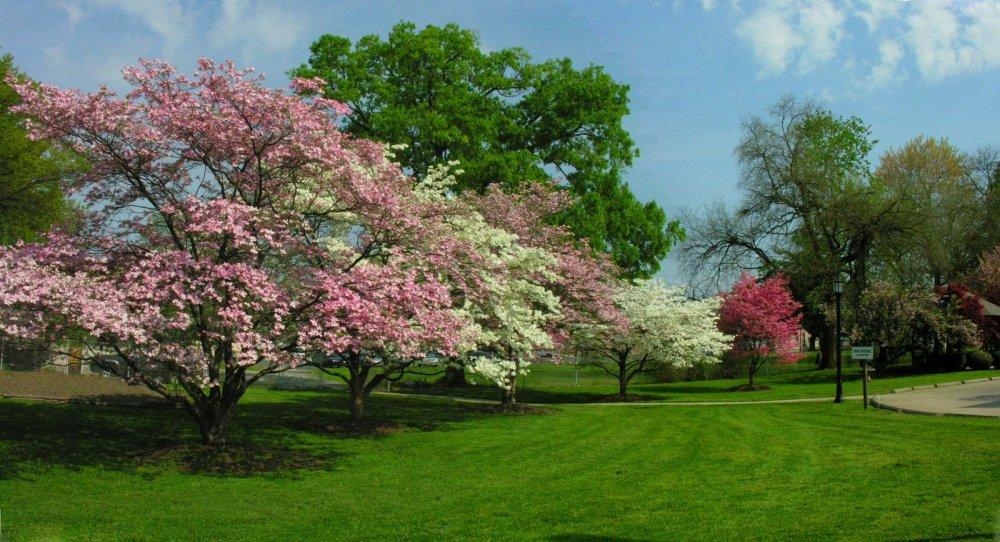 It is defintely Spring.