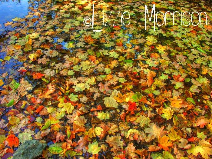 Cherokee Park - Louisville - Fall Foliage 2008