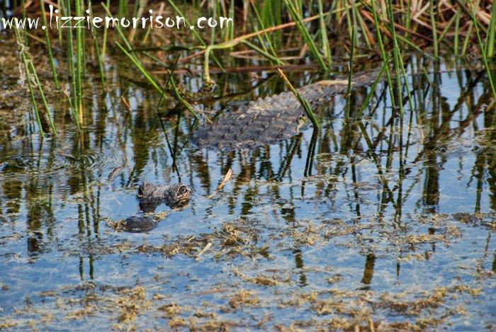 Loxahatchee Reserve 04-04-09